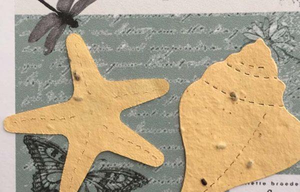 PBS1017 (Starfish and Shell Diecut))