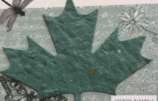 PBS1020 (Maple Leaf #1 Diecut)