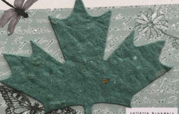PBS1020 (Maple Leaf #1 Diecut)